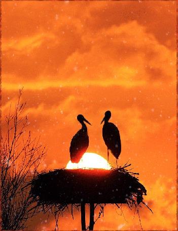 Анимация Аисты прилетели в родное гнездо (© kozak), добавлено: 08.06.2015 19:25