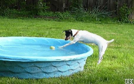 Анимация Собака бегает вокруг воды с мячиком (© Seona), добавлено: 09.06.2015 12:39