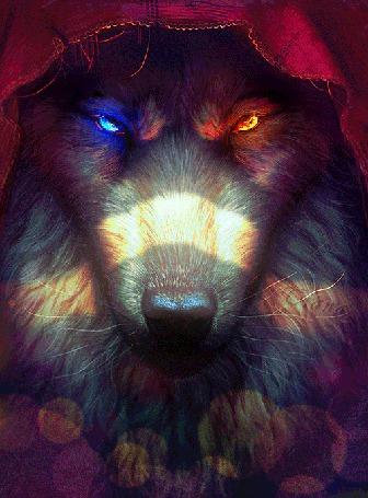 Анимация Волк в бордовом капюшоне с разноцветными сияющими глазами (© Tiana), добавлено: 09.06.2015 16:24
