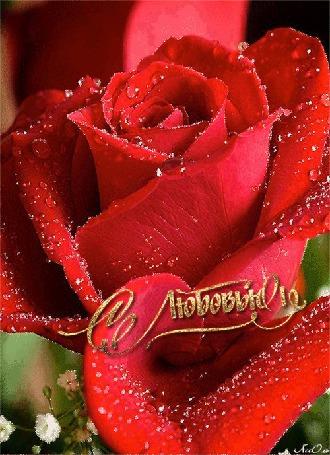 Анимация Алая роза переливается на темно-зеленом фоне (С Любовью) АссОль (© Natalika), добавлено: 10.06.2015 09:25