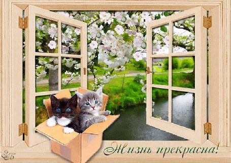 Анимация Открытое окно с видом на чудесную природу на фоне котята / Жизнь прекрасна / З, Б,/ (© qalina), добавлено: 13.06.2015 14:21