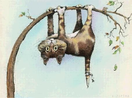 Анимация Кот залез на тонкое деревце и висит вниз головой зацепившись лапами с огромными от страха глазами (© царица Томара), добавлено: 13.06.2015 14:45