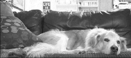Анимация Котенок запрыгивает на собаку и играет с ней (© zmeiy), добавлено: 15.06.2015 09:20
