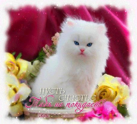 Анимация Белый голубоглазый котенок в цветах на малиновом фоне шелка (Пусть счастье Тебя не покидает!) / автор, АссОль