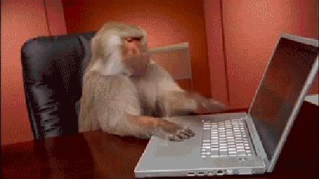 Анимация Обезьяна была очень недовольна, когда ей отключили Интернет (© Anatol), добавлено: 18.06.2015 01:13