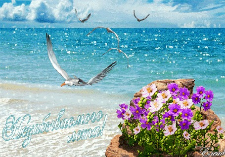 Картинки море цветы и