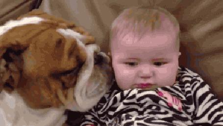 Анимация Бульдог добродушно лижет малыша, а тот удивленно смотрит и готовится заплакать (© Anatol), добавлено: 23.06.2015 00:36