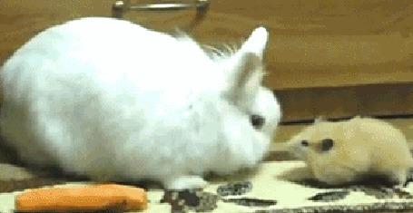 Анимация Хомяк нахально утаскивает морковку из - под носа не ожидавшего этого кролика (© Anatol), добавлено: 23.06.2015 01:04