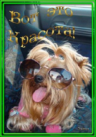 Анимация Собачка в очках с высунутым язычком / Вот это красота / Эрика/