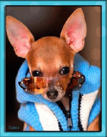 Анимация Собачка в очках и в жакете / Эрика/ (© qalina), добавлено: 25.06.2015 21:23