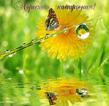 Анимация Бабочка сидит на тросточке / хорошего настроения/ (© qalina), добавлено: 25.06.2015 21:26