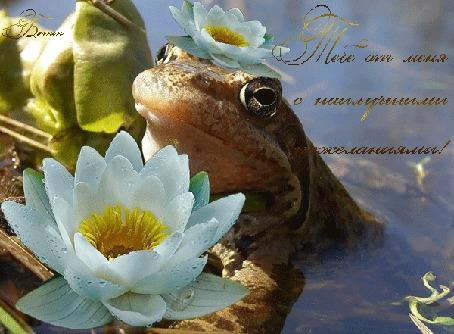 Анимация Лягушка с цветком в болоте / Тебе от меня с наилучшими пожеланиями/ (© qalina), добавлено: 25.06.2015 23:02