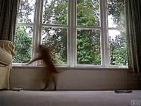 Анимация Собака, завидев чего -то на дворе, взволновано бегает перед окном