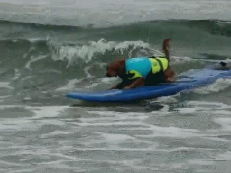 Анимация Собака - серфингистка успешно преодолевает волны, плывя по морю