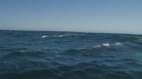 Анимация Из брызг, поднимаемых дельфином, плывущем в море, образуется радуга (© Anatol), добавлено: 26.06.2015 01:25