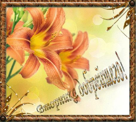 Анимация Цветы лилии, в бликах / вторника добрейшего/ (© qalina), добавлено: 26.06.2015 10:58