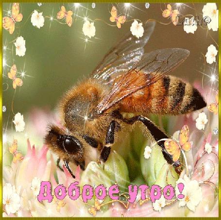 Анимация Пчелка трудится среди цветов и бабочек / Доброе утро / Луша/