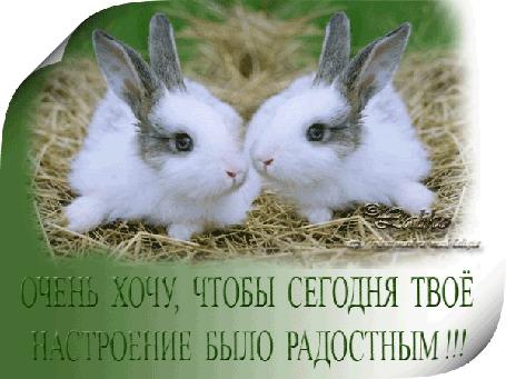 Анимация Два очень красивых кролика / Очень хочу, чтобы сегодня твое настроение было радостным/ (© qalina), добавлено: 26.06.2015 14:09