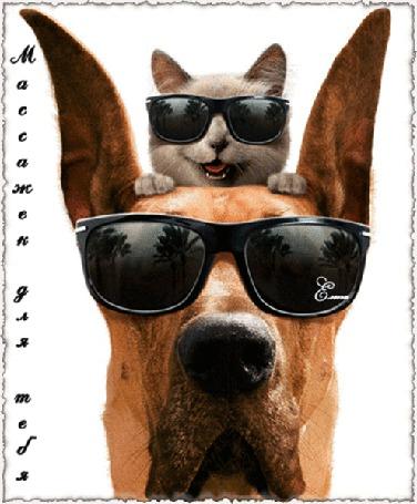 Анимация Кошка в очках сидит на голове у собаки в очках / Массажек для тебя/