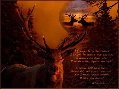 Анимация Влюбленный рогатый олень думает о своей оленихе / Я жизнь бы за тебя отдал Я смерть бы принял, так как есть/ :-) :-) :-) :-) :-) (© qalina), добавлено: 27.06.2015 15:30