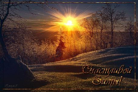 Анимация Зимний лес на фоне солнечных лучей / Счастливой зимы / Элиза68/ (© qalina), добавлено: 03.07.2015 17:19