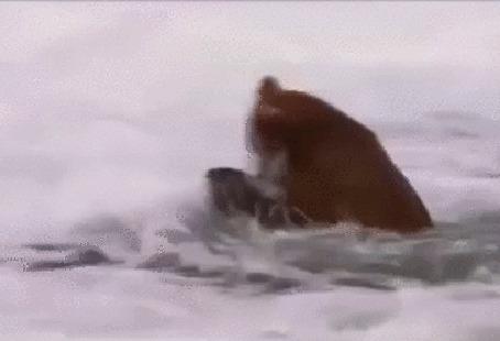 Анимация Стоящий в реке мишка угощается пойманным лососем