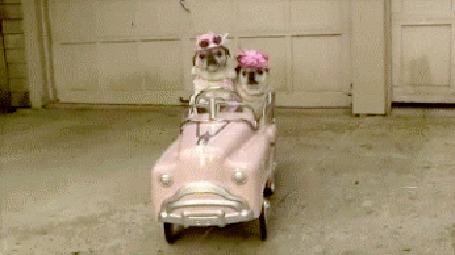 Анимация Две собаки катаются на игрушечном авто (© Anatol), добавлено: 04.07.2015 00:39