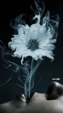 Анимация Из губ девушки дым в виде цветка, maryla