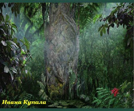 Анимация Дерево в образе лешего в лесу, где расцвел алый цветок папоротника (Ивана Купала)