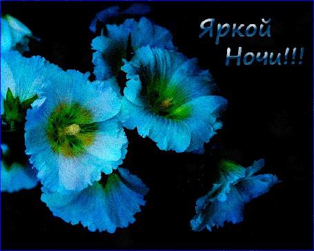 Анимация Голубые цветы мальвы на четном фоне (Яркой ночи!) От Барков (© Natalika), добавлено: 07.07.2015 11:06