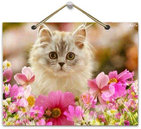 Красивая персикового цвета кошка, обои с кошками 24