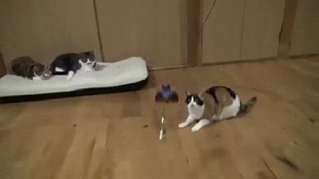 Анимация Очень прыгучий кот выделывает акробатические трюки (© Anatol), добавлено: 08.07.2015 01:02