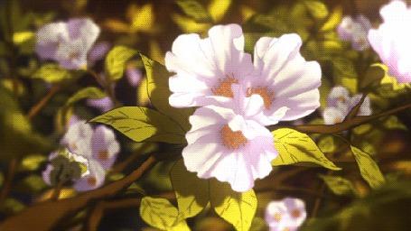 Анимация Розовые цветы колышутся от ветра (© zmeiy), добавлено: 08.07.2015 20:11