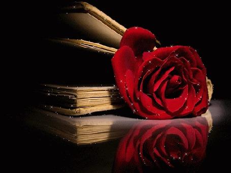 Анимация Красная роза лежит в книге, на черном фоне