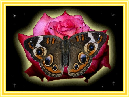 Анимация Бабочка сидит на розе (© qalina), добавлено: 09.07.2015 20:58