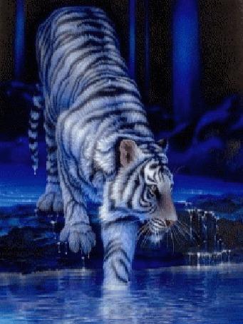 Анимация Тигр на синем фоне заходит в воду (© qalina), добавлено: 11.07.2015 09:03