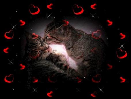 Анимация Влюбленный кот целует свою спящую кошечку на фоне сердечки (© qalina), добавлено: 11.07.2015 09:14