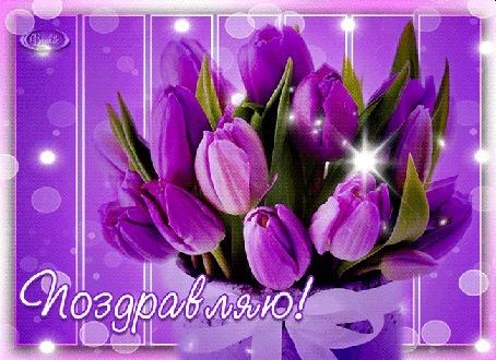 Анимация Сиреневые тюльпаны на сиреневом фоне / Поздравляю/ (© qalina), добавлено: 13.07.2015 16:42