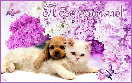 Анимация Белый котенок с собачкой на фоне сирени и бабочек (Поздравляю!)