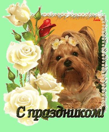 Анимация Собачка на фоне белых роз (С праздником!), Лейла