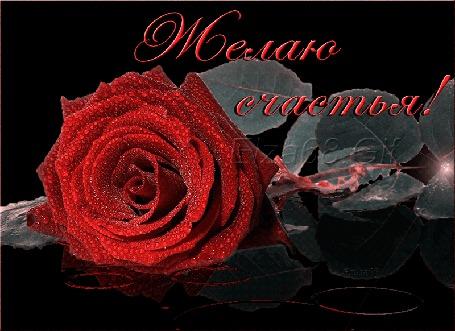 Анимация Красная роза (Желаю счастья!), Ельза 68 Gif (© qalina), добавлено: 13.07.2015 17:51
