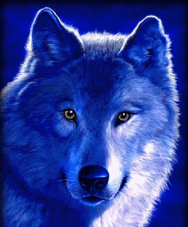 Анимация Волк голубых кровей на голубом фоне (© qalina), добавлено: 13.07.2015 21:52