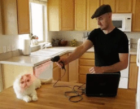 Анимация Клонирование котов через компьютер (© phlint), добавлено: 15.07.2015 20:59