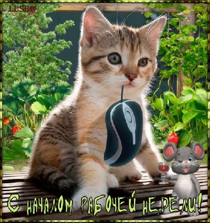 Анимация Котенок с мышками на фоне природы и цветов (С началом рабочей недели) , ЛУША (© qalina), добавлено: 15.07.2015 21:01