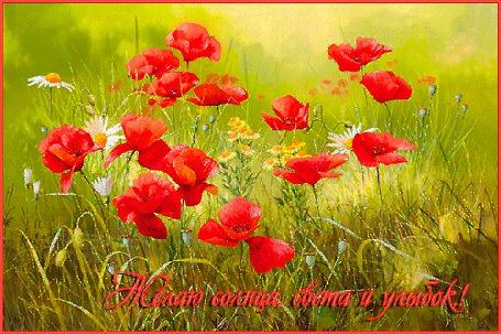 Анимация На лугу цветут красные маки и белые ромашки. (Желаю солнца, света и улыбок!) (© Solnushko), добавлено: 16.07.2015 12:13