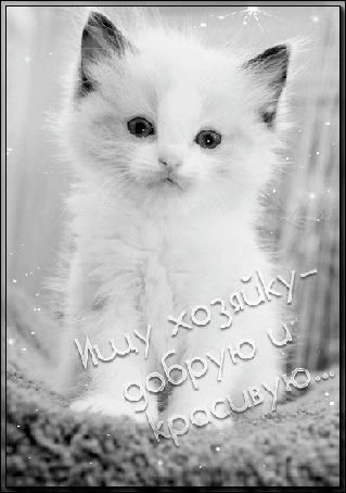 Анимация Сиамский котенок голубыми глазами шевелит ушками (Ищу хозяйку-добрую и красивую)