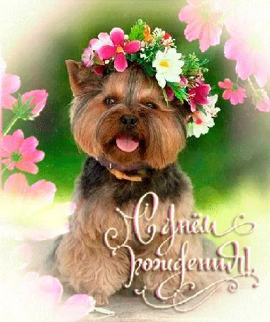 Анимация Собачка с веночком на голове на фоне цветов / С днем рождения/