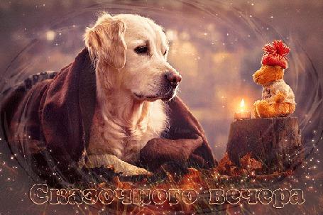 Анимация Собачка на фоне горящей свечи смотрит на плюшевую игрушку / Сказачного вечера / Е, Лузан/ (© qalina), добавлено: 16.07.2015 19:25