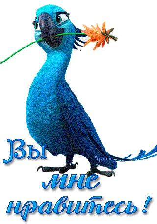 Анимация Попугай с цветком в клюве / Вы мне нравитесь / Эрика/