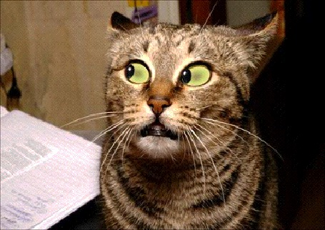 Анимационные картинки коте